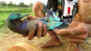 Download Easy Bird Trap - Simple DIY Creative Bird Trap make from Wood That Work 100% By Men Video