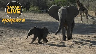 Download All Babies Love Sand, Especially Elephants! Video
