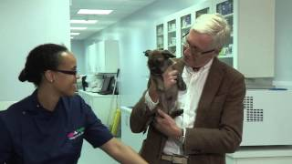 Download Microchipping Video