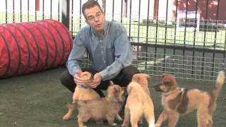 Download Choosing The Greatest Puppy For Your Life Video