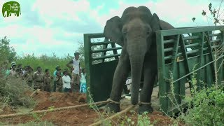 Download Mega Moves: How wildlife officers move giant elephants to safe zones Video