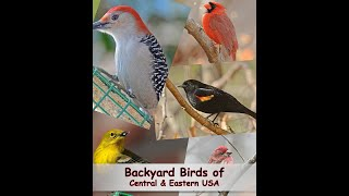 Download Identify Your Common Backyard Birds Video