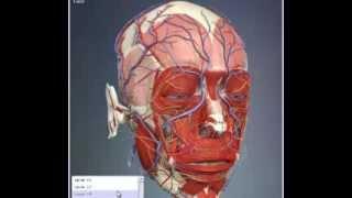 Download Anatomy Video Video