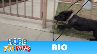 Download Abandoned dog gets hit by a car and then tries to escape from rescuers! Video