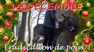 Download 14 décembre - Éradication de poux ! Video