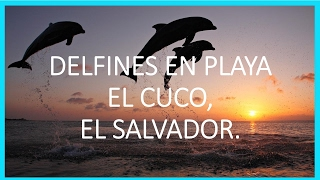 Download DELFINES EN PLAYA EL CUCO | SAN MIGUEL | EL SALVADOR Video