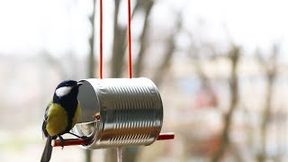 Download How to Make a Bird Feeder Video