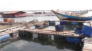 Download Làng nuôi cá lồng bè tại Long Sơn, Vũng Tàu. Video