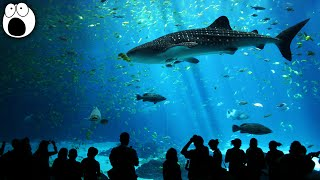 Download 10 Most AMAZING Aquariums In The World Video