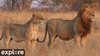 Download Africam Nkorho Bush Lodge powered by EXPLORE.org Video