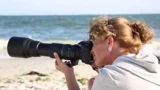Download I, Photographer: Lisa Franceski's Shore Birds Video