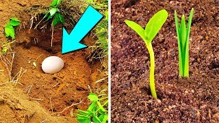Download Put An Egg In Your Garden And See What Will Grow Video