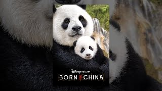 Download Disneynature: Born in China Video