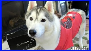 Download DEADPOOL HUSKY | Loot Pets Unboxing #LootPets February Video