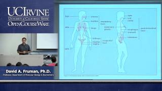 Download Biological Sciences M121. Immunology with Hematology. Lecture 01. Course Introduction. Video