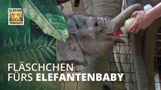 Download Fläschchen für's Elefantenbaby Video