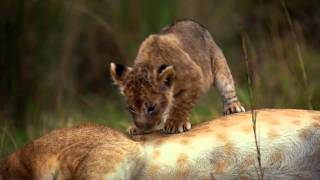 Download African Cats: Official Trailer 2 Video