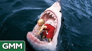 Download 6 Strangest Things Swallowed by a Shark Video