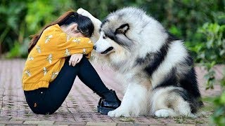 Download Best Friend - Cute and Funny Animals Videos Compilation Video