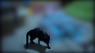 Download 猫部屋でえらい物が倒れてた Big thing had fallen in the cat room【瀬戸の三毛猫日記】 Video