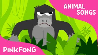 Download Jungle Boogie | Animal Songs | PINKFONG Songs for Children Video