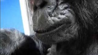 Download Koko Reads Animalia Video