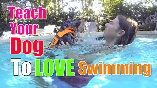 Download How to Teach Your Dog to Love WATER & SWIMMING Video
