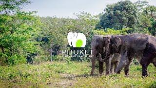 Download Phuket Elephant Sanctuary Video