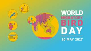 Download Their Future is Our Future - World Migratory Bird Day 2017 Video
