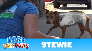 Download Homeless dog was so hungry he ate rocks! Thanks to your support, we saved his life! Video