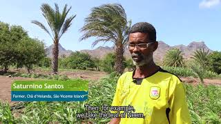 Download Fall Armyworm in Cabo Verde Video