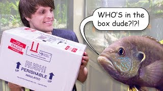 Download 9 NEW FISH - Cool & Unique Fish Unboxing! Video