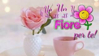 Buongiorno Amica Mia Free Download Video Mp4 3gp M4a Tubeidco