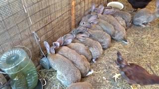 Download Кролики в вольере Video