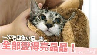 Download 一次洗四隻小貓!全部變得亮晶晶【好味貓日常】EP20 Video