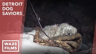 Download We Couldn't Believe What We Discovered Following This Dog Acting Weird - Hope For Dogs | My DoDo Video