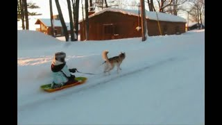 Download Siberian Husky Shelby pulls a Sled January 2009 St. Bernard Moonshine Video