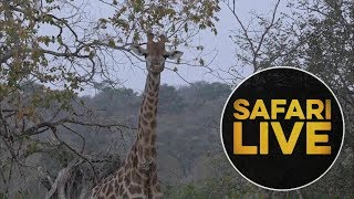 Download safariLIVE - Sunrise Safari - June 12, 2018 Video