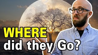 Download What Ever Happened to All the Moon Trees? Video