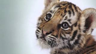 Download Illegal Wildlife Trade Documentary Video