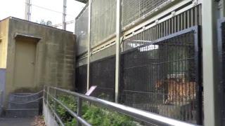 Download ペンギン舎からキャットワールド 東武動物公園 Video