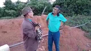 Download Seu Mané vende o boi de seu Antonio muito barato. Video