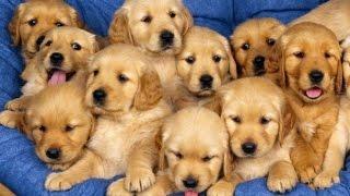 Download 12 Cung mệnh hợp khi bạn nuôi loại chó nào Video