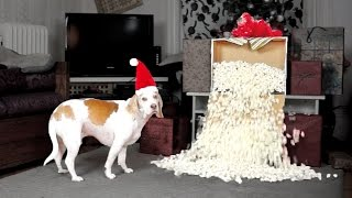 Download Dog Gets Popcorn Fountain for Christmas: Cute Dog Maymo Video