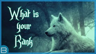 Download What Is Your Rank In A Wolf Pack? Video
