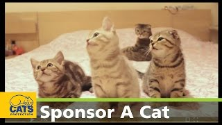 Download Sponsor a cat and change their life today Video