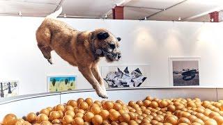 Download Dominic Wilcox designs contemporary art exhibition for dogs Video