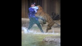 Download When Zoo Animals Attack Compilation Part 3 Video