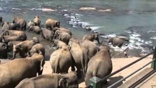 Download disabled elephant (LANDMINE!!!) Video