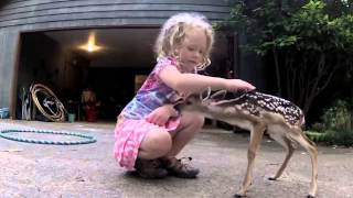 Download The Deer Whisperer Video